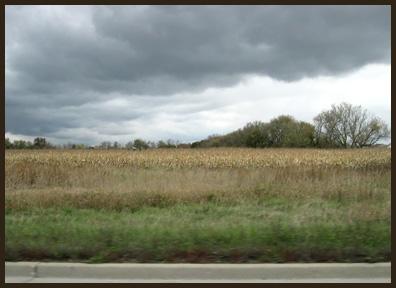 1299-more-corn