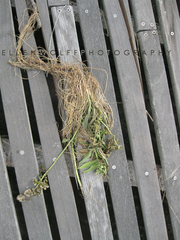 sandgrass dislodged and relocated during the storm