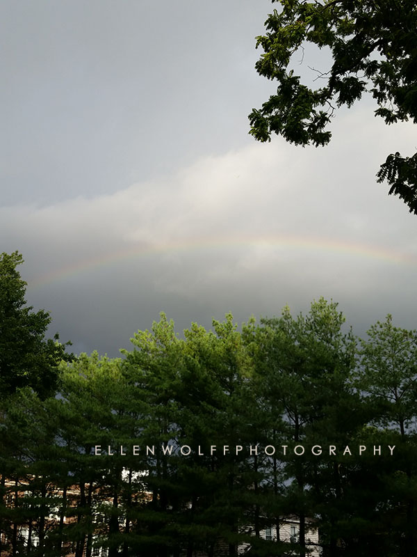 rainbow over the trees